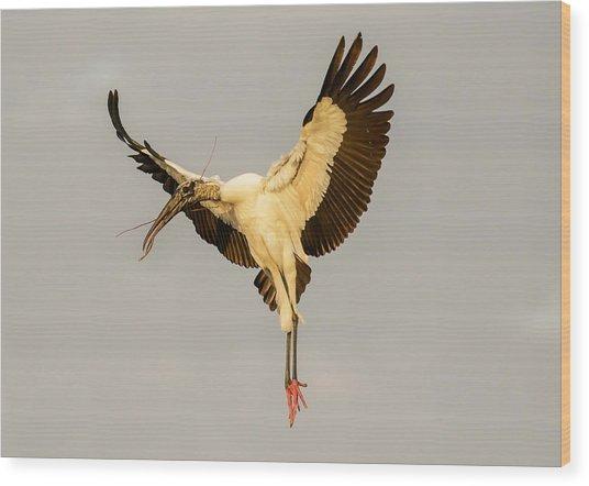 The Wood Stork Angel Wood Print