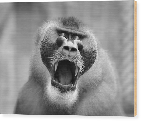 The Yawn I Wood Print by Antje Wenner