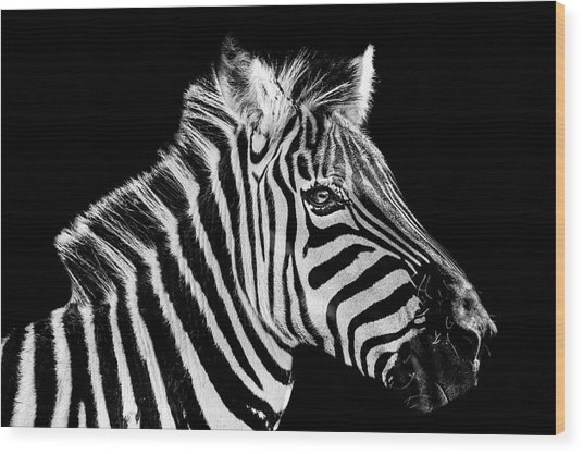 The Zebra Stripes Wood Print