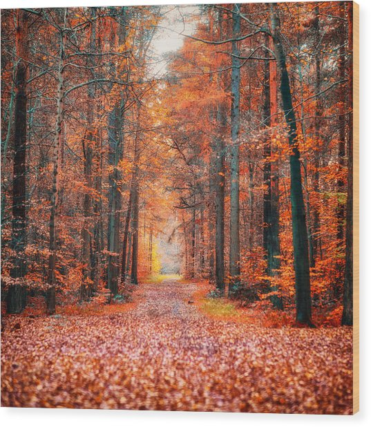 Thetford Forest Wood Print