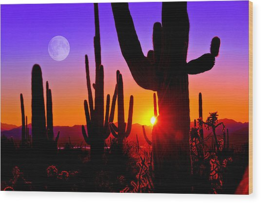 Third Sunset At Saguaro Wood Print
