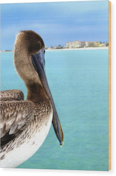 This Is My Town - Pelican At Clearwater Beach Florida  Wood Print