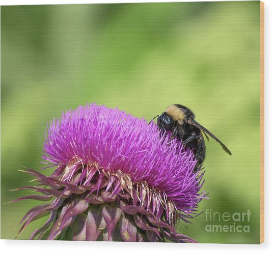 Thistle And Bee Wood Print