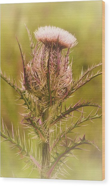 Thistle And Thorns Unfolding Wood Print