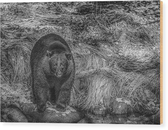 Thornton Creek Black Bear Wood Print