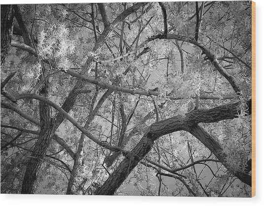 Those Branches -  Wood Print