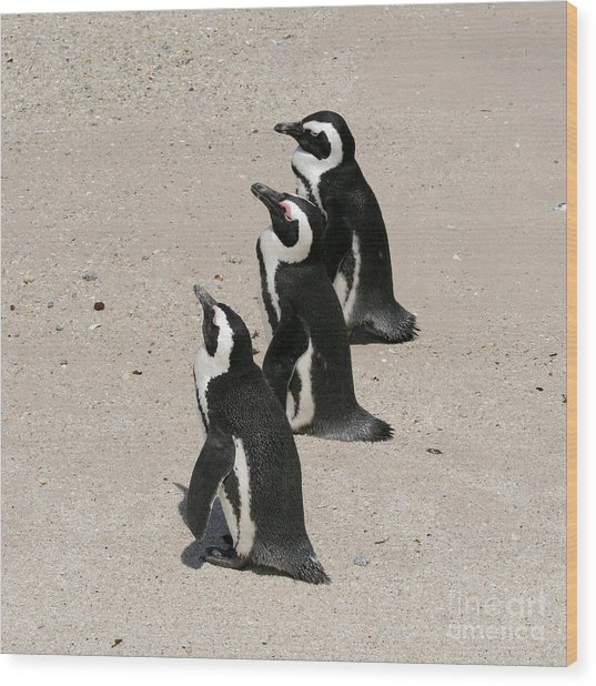 Three African Penguins Wood Print