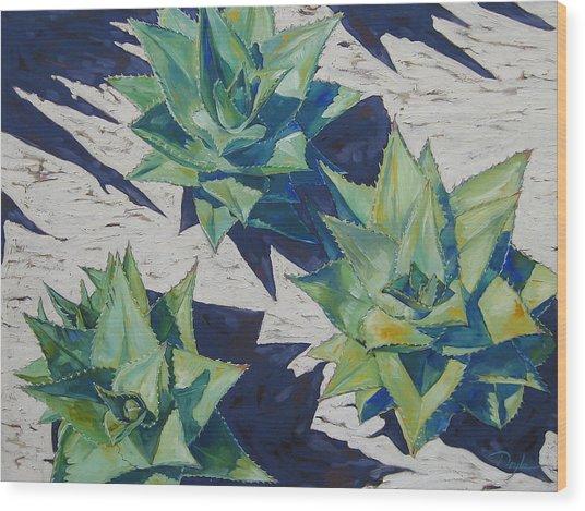 Three Aloe Wood Print by Karen Doyle