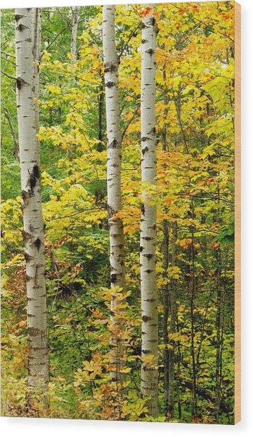 Three Birch Wood Print