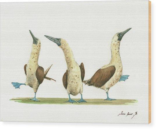 Three Blue Footed Boobies Wood Print
