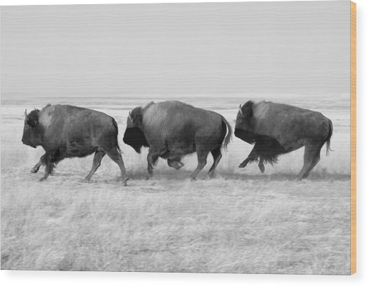 Three Buffalo In Black And White Wood Print