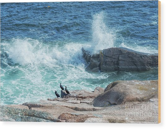 Three Cormorants At Monument Cove, Acadia National Park Wood Print
