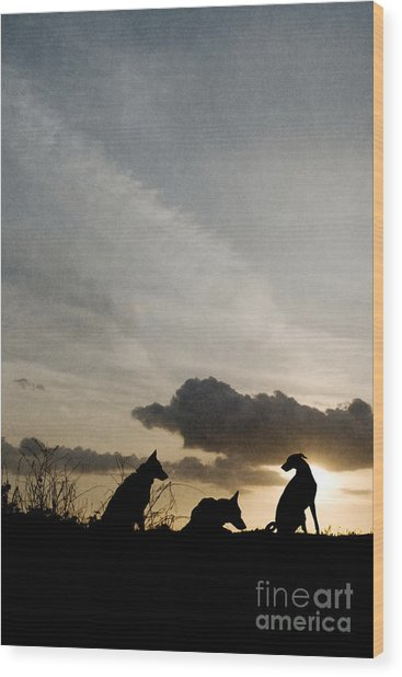 Three Dogs At Sunset Wood Print