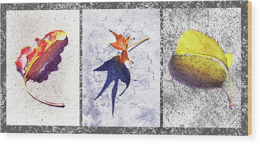 Three Fall Leaves Autumn Trio  Wood Print