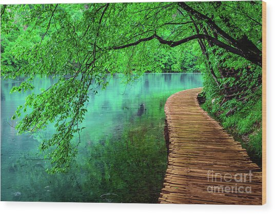 Tree Hanging Over Turquoise Lakes, Plitvice Lakes National Park, Croatia Wood Print