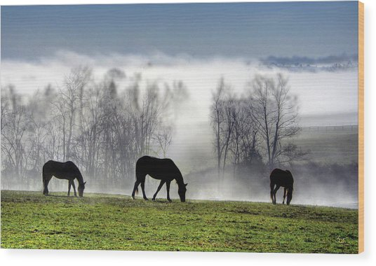 Three Horse Morning Wood Print