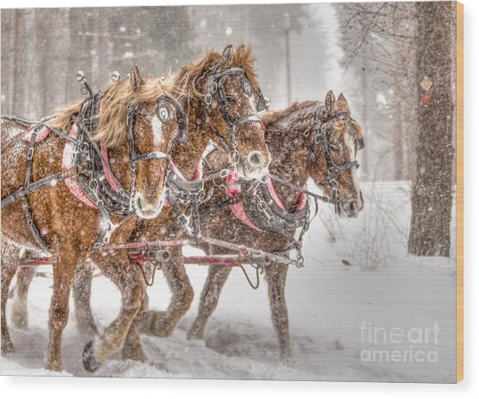 Three Horses - Color Wood Print