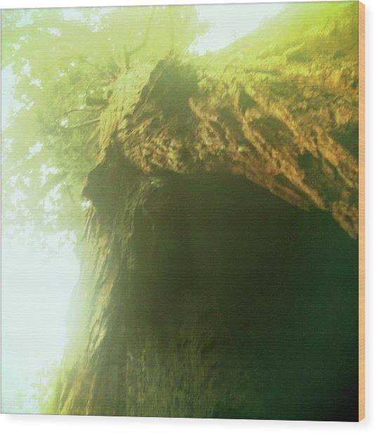 Three Hundred Feet To The Sky Wood Print