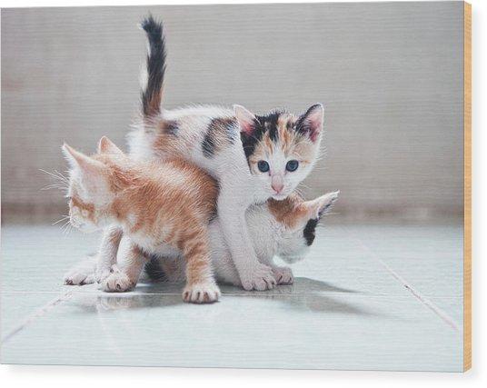 Three Kittens Wood Print