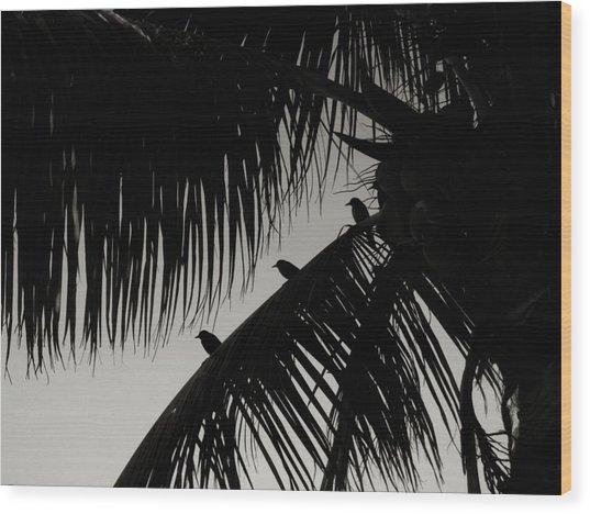 Three Little Birdies Wood Print by JAMART Photography