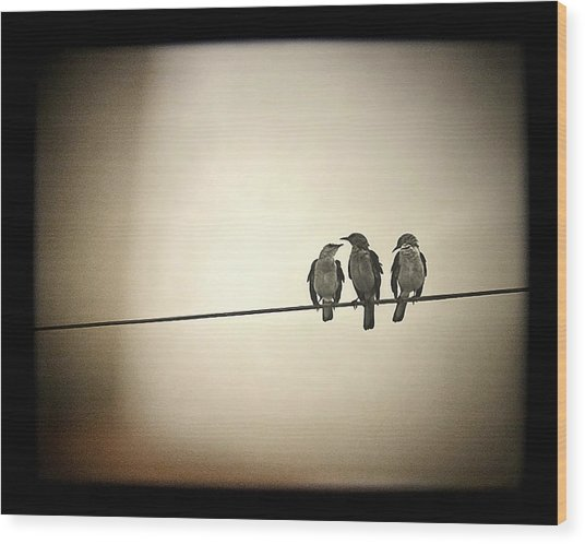 Three Little Birds Wood Print