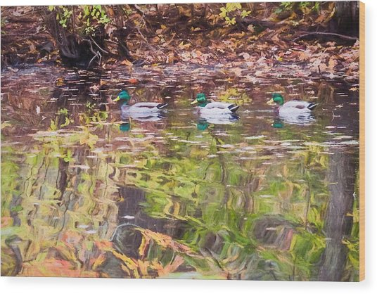 Three Mallards. Wood Print