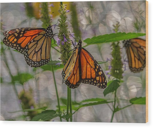 Three Monarch Butterfly Wood Print