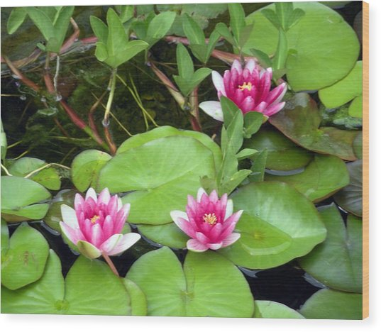 Three On A Pond Wood Print by Jeanette Oberholtzer