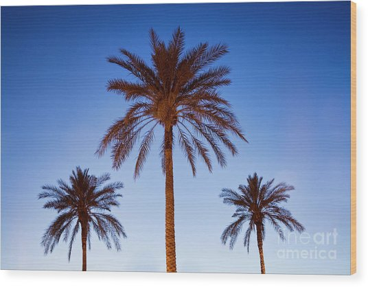 Three Palms Wood Print
