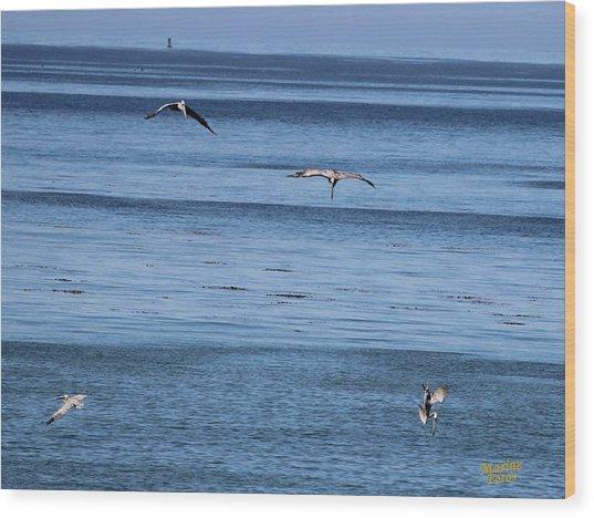 Three Pelicans Diving Wood Print