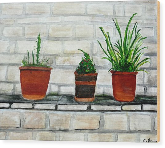 Three Pots Wood Print by Cathy Jourdan