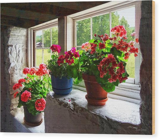 Three Pots Of Geraniums On Windowsill Wood Print