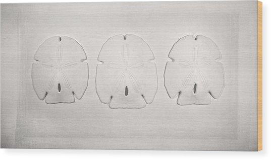 Three Sand Dollars Wood Print