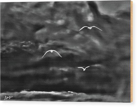 Three Seagulls Wood Print
