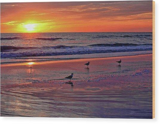 Three Seagulls On A Sunset Beach Wood Print