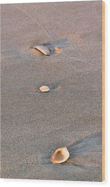 Wood Print featuring the photograph Three Shells by Willard Killough III