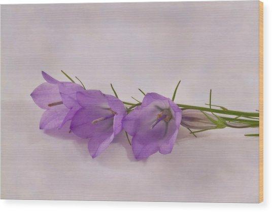 Three Wild Campanella Blossoms - Macro Wood Print