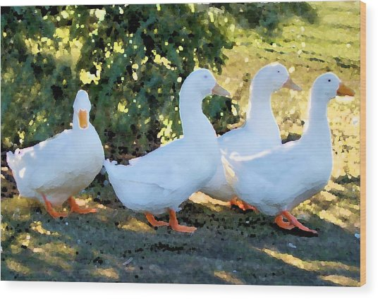 Threes Company Wood Print by Ellen Lerner ODonnell