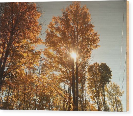 Through Sun Glasses Wood Print