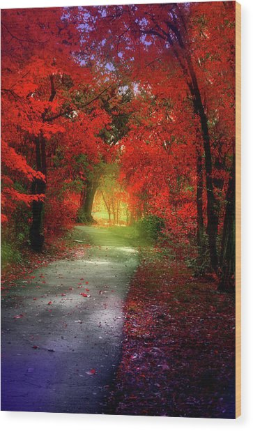 Through The Crimson Leaves To A Golden Beginning Wood Print