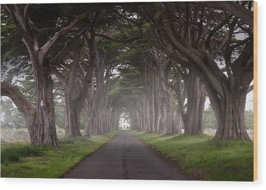 Through The Cypress Wood Print