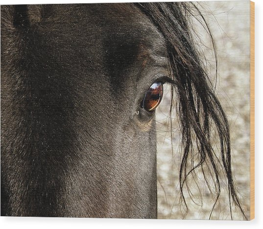 Through The Eye Of A Stallion Wood Print