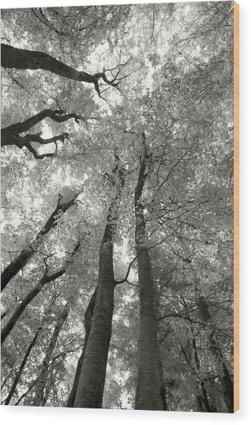 Through The Forest 2 Wood Print by Marjan Jankovic