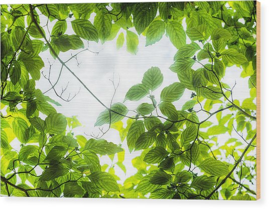Wood Print featuring the photograph Through The Leaves by David Coblitz