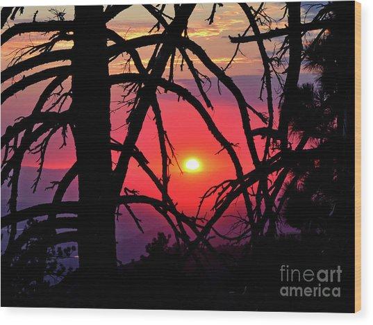 Through The Pines Wood Print