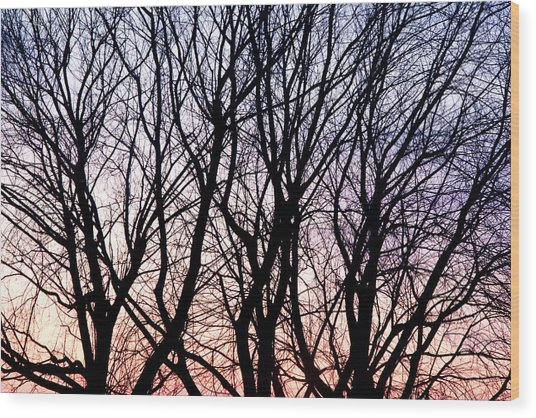 Through The Trees Wood Print by Martin Rochefort