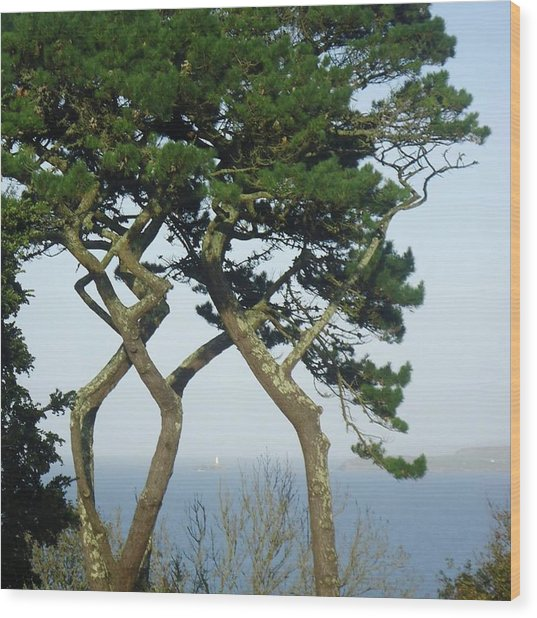 Through The Trees To Godrevy From St. Ives Wood Print