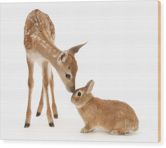 Thumper And Bambi Wood Print