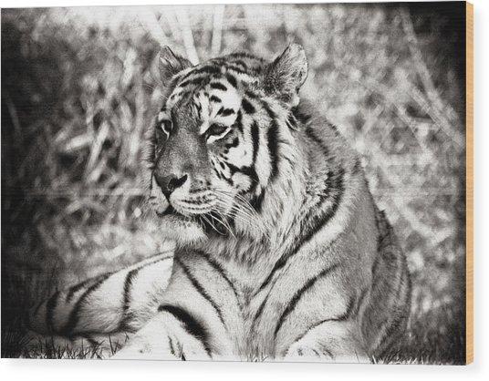 Tiger Wood Print by Angela Aird