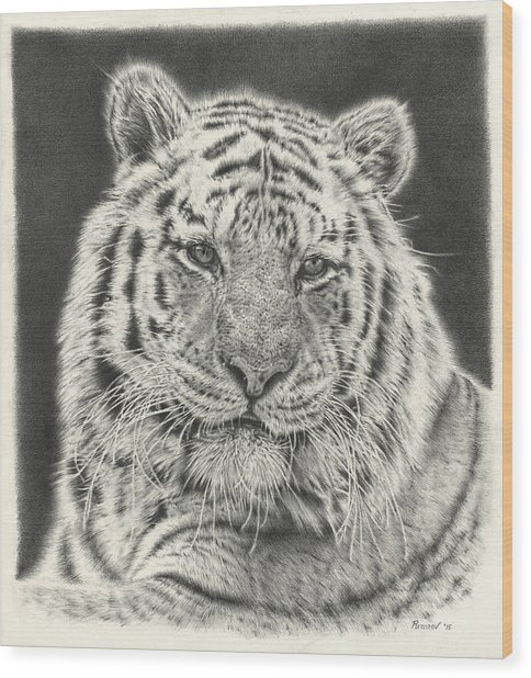 Tiger Drawing Wood Print